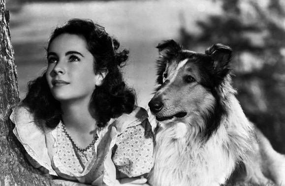 I 10 film più belli con protagonisti gli animali