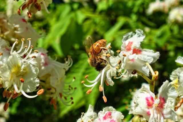 polline energetico riscostituente