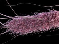 scamorza ritirata escherichia coli