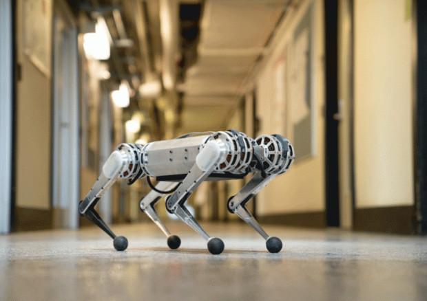 mini ghepardo